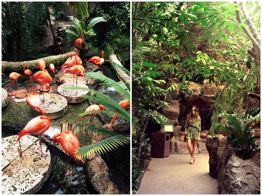 FashionCoolture Dallas Aquarium .